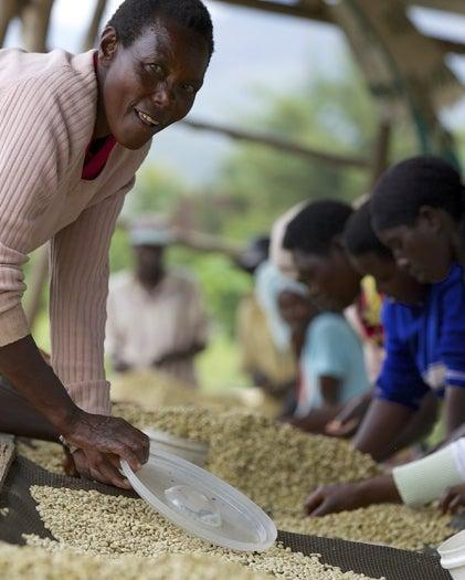Women harvesting coffee beans on farm